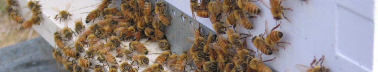 Nelson Beekeepers Club