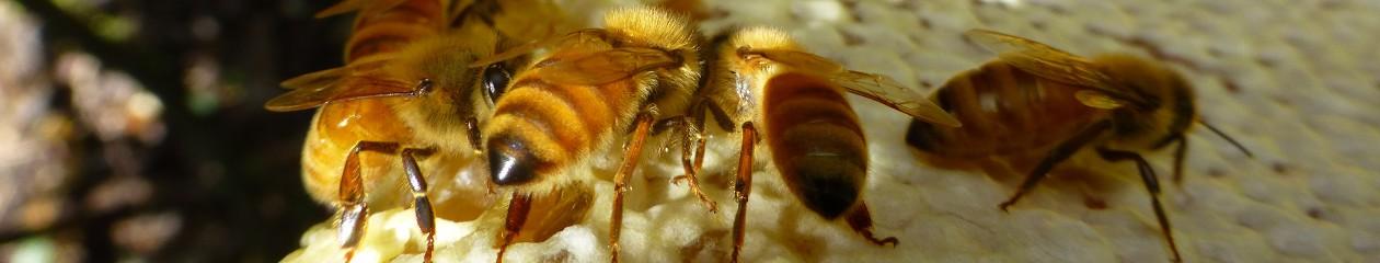 Nelson Beekeepers Club